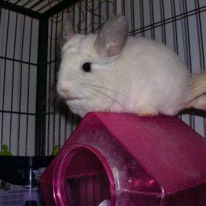 Minnie (still a little camera shy)
