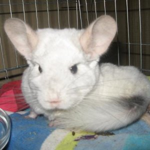 Rescue- Houdini- RIP little buddy