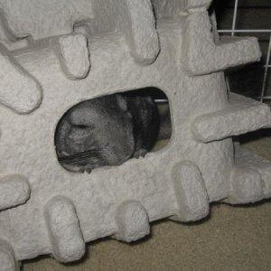 Chula hiding.