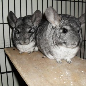 Rodya (front) and Sonya, pre-separation.