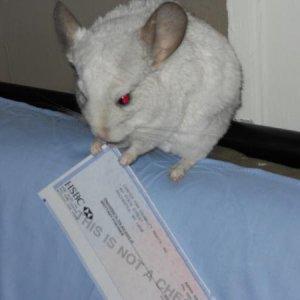 Eating my boyfriend's check!! Little jerk.