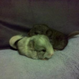 Tribble and Tia when they were 5 days old