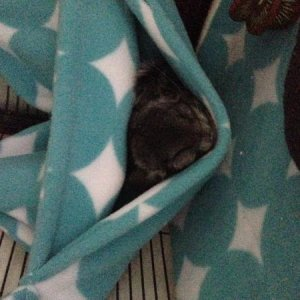 His first hammock