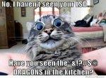 silly-cat-memes-2.jpg