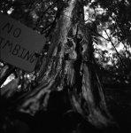 old tree ARAX 60.jpg