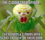 Clown Spider.jpeg