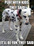 spider dalmatian.jpg