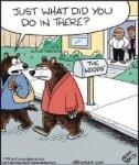 Bear woods.jpg