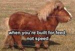 small-horse.jpg