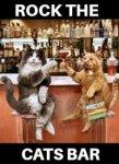 cats bar.jpg