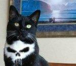 death cat.jpg
