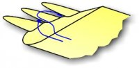 birdwingdetail1.jpg