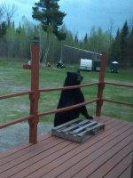 Nosey Bear.jpg