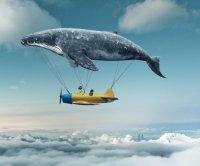 whale-airplane.jpg