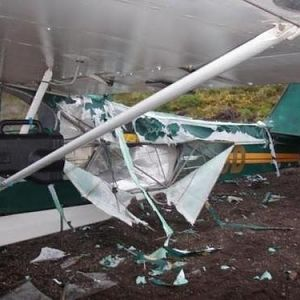 plane bear damage 1