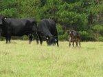 calves 55 (3)_v1.jpg