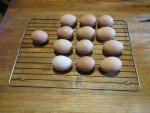 eggs (1).JPG