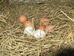 Nests 01 (1).jpg