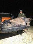 Wild hog, Texas.jpg