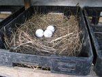 Nests 01 (1)a.jpg