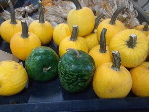 Gourds sep20 a  (2)a.jpg