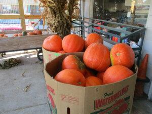 Pumpkins (3) sm.JPG