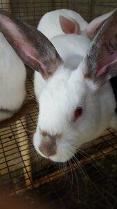 Rabbit#2.jpg
