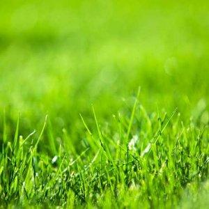 Best Gardening Service provider in Hawthorn