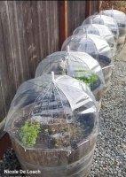 temp greenhouse.jpg