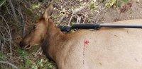 2021 09 10 elk Sawmill Cr unit 39.jpg