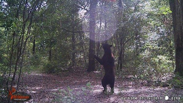 2-tone Bear Standing WEB.jpg