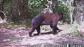 2-tone Bear daytime(crop)WEB.jpg