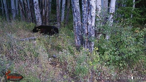bear-at-tree.jpg