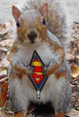 Supersquirrelweb.jpg