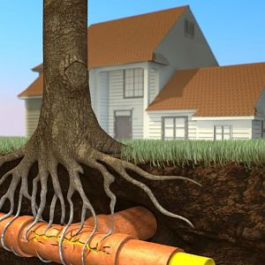 House with tree roots thru pipe