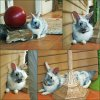 collage_photocat2.jpg