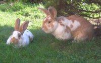 Dotty und Herr Hase2.jpg