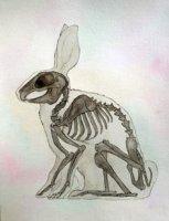 b522cd5367347a4f3924982a40fd6777--skeleton-anatomy-skeleton-art.jpeg