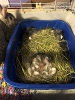 kits in nest box.jpg