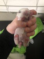 baby bunny 1.jpg