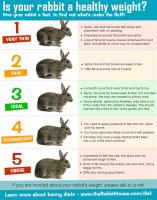 rabbitweightbodyscore.png