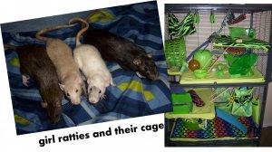 collage rats.jpg