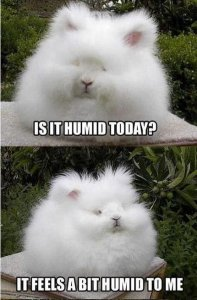 is-it-humid-today-bunny.jpg