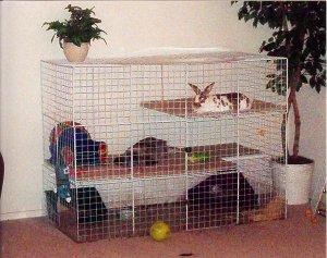 big cage.JPG