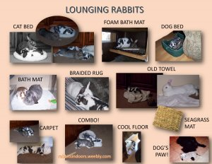 lounging rabbits lo res.jpg