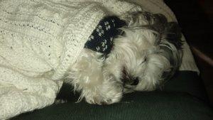 Meiling sleeping.jpg