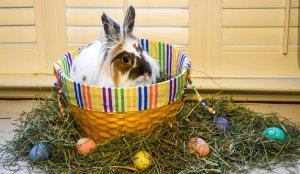 Easter Lawrence.jpg