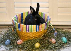 Easter Lucas.jpg