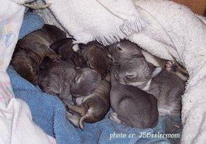 JSBPhotoCR_CuddlesEatingWhileBabiesSleep_2006RST_1652.jpg