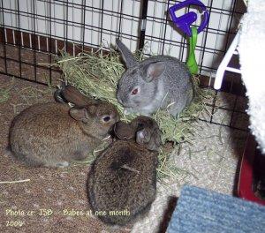 Cuddles_Archive_ThreeKidsMunchingHayMar406.JPG